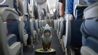 Spirit Airlines Flight Attendant Under Fire For Engine