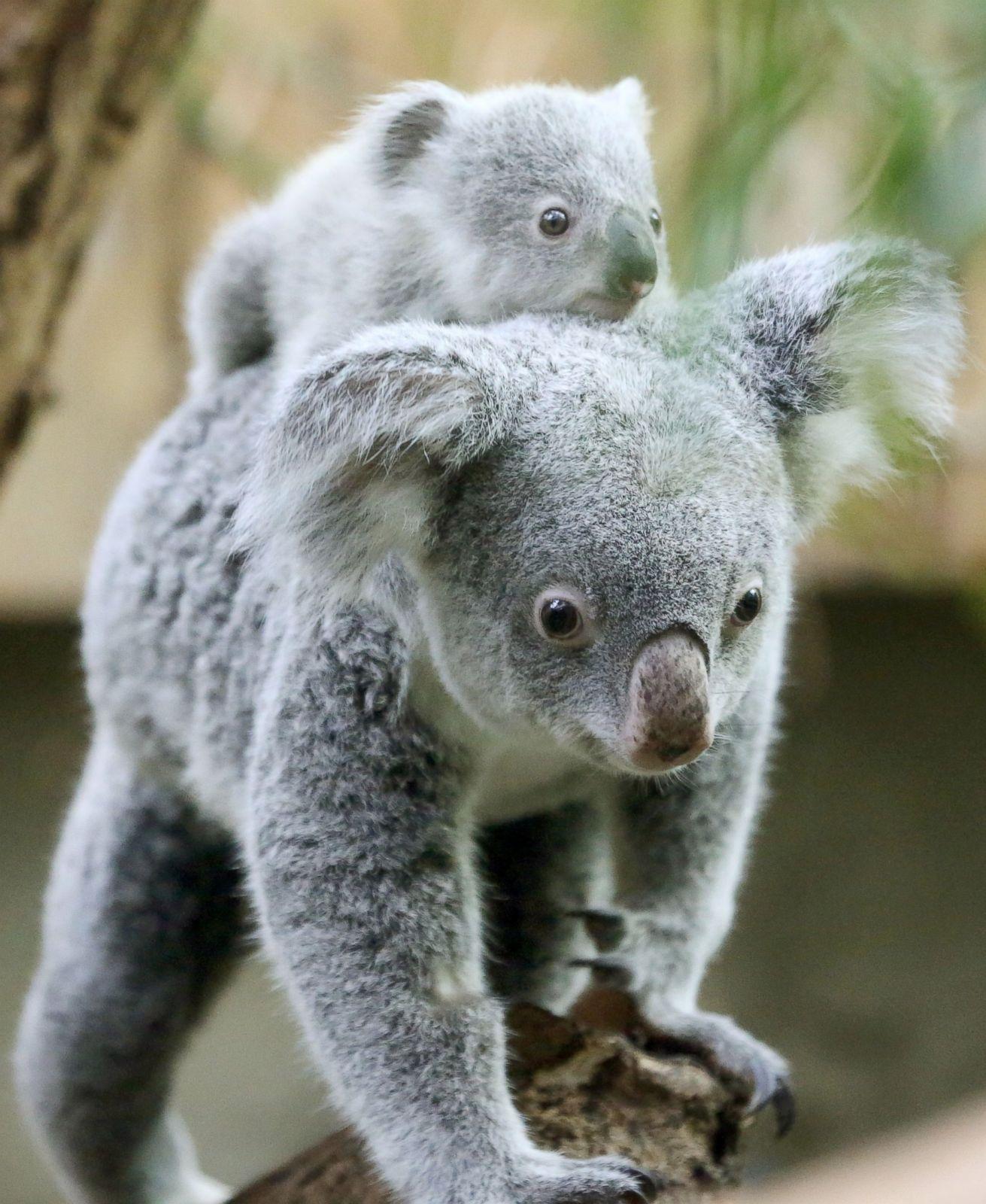 Cutest baby animals from around the world Photos  ABC News
