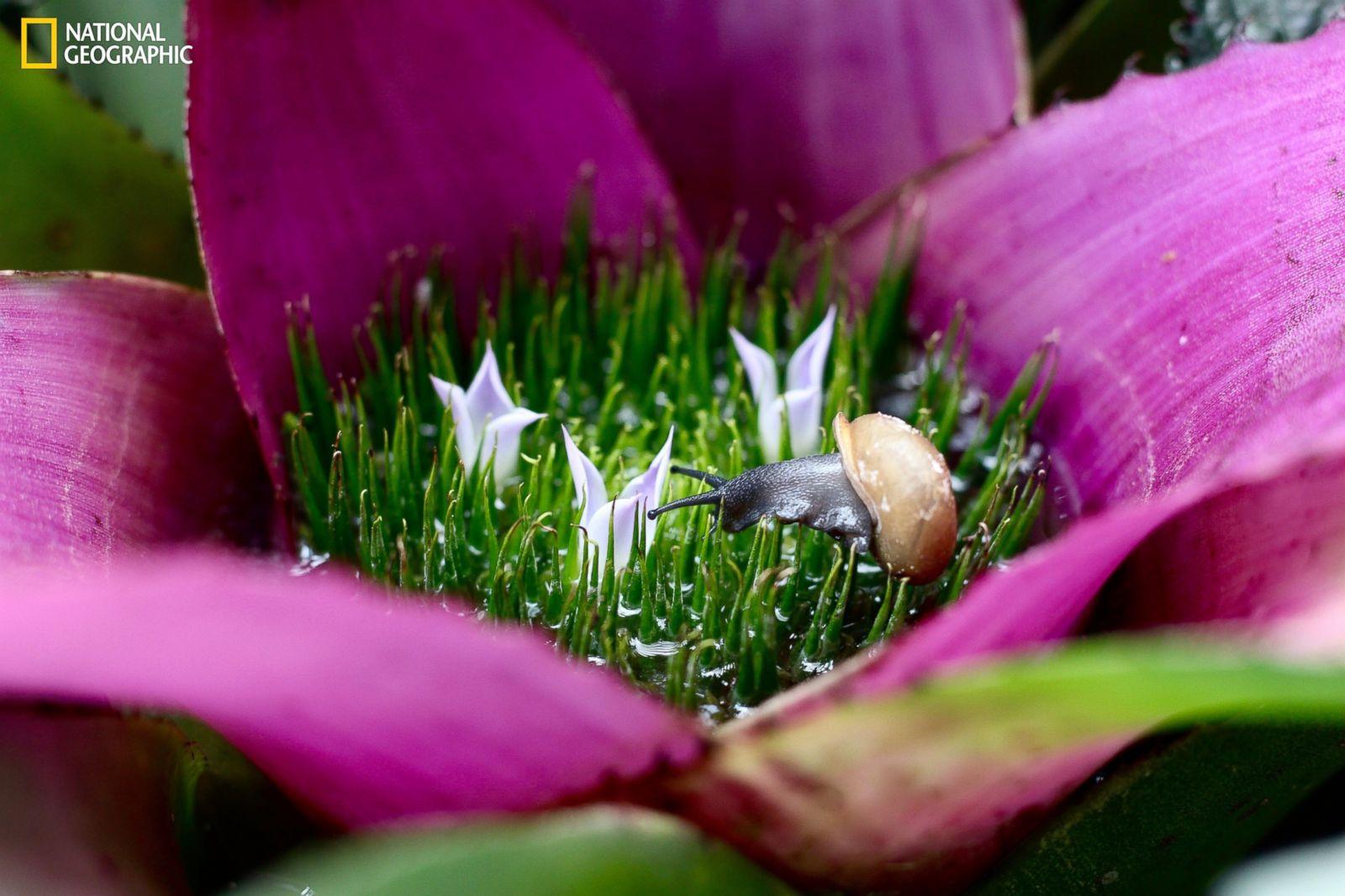 Фото живых цветов в природе