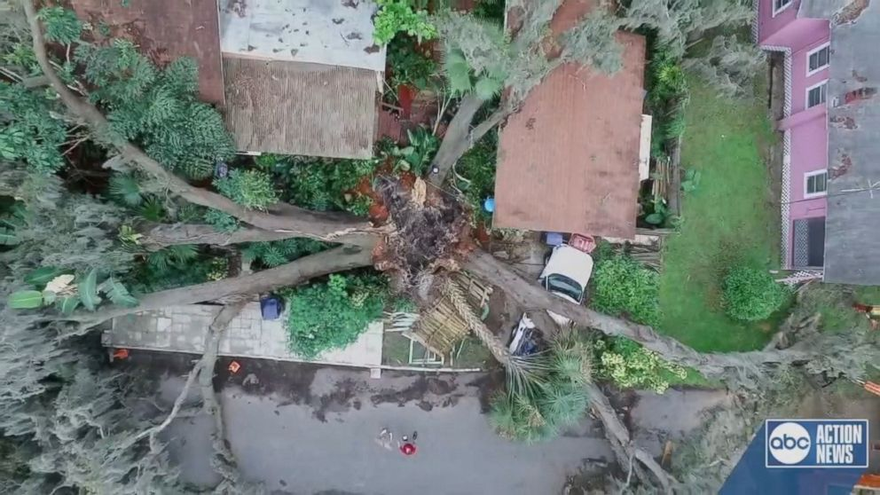 WATCH:  Massive tree with 5 trunks falls on Florida home