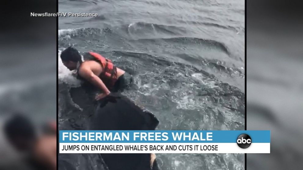 WATCH:  Dramatic whale rescue