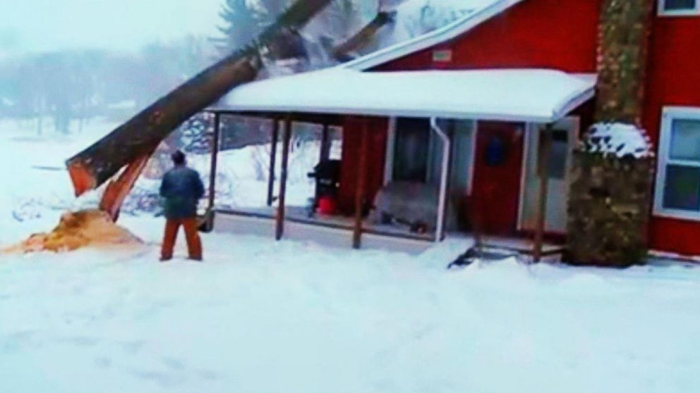 Caught on Camera: Tree-Cutting Fails and Mishaps Video - ABC News