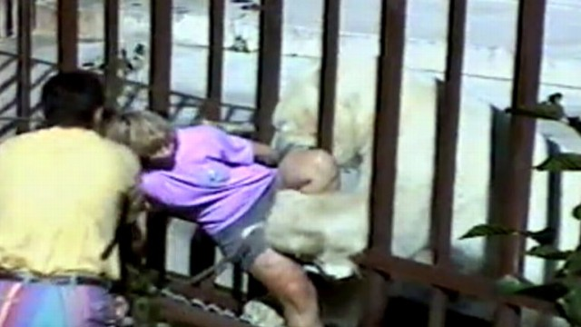 VIDEO: An Australian tourist gets too close to a polar bear at the Anchorage Zoo.