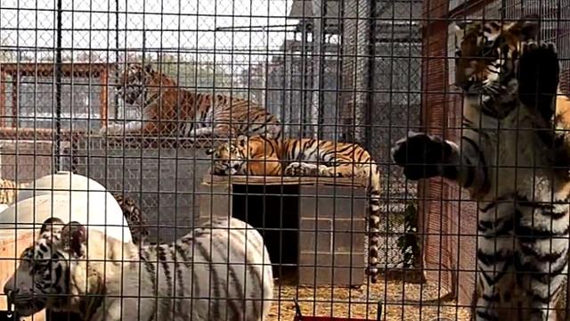 Zoo Confidential Video - ABC News