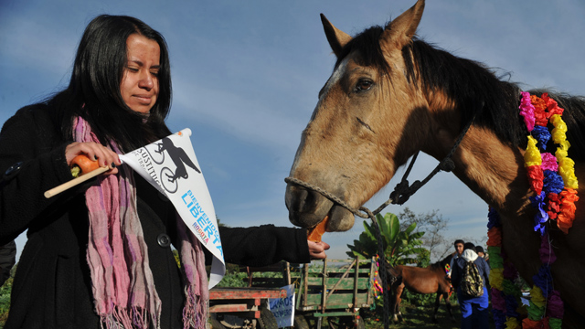 PHOTO:A veterinary student receives a horse which used to be used in a drawn-cart on February 26, 2013, in Bogota, Colombia.