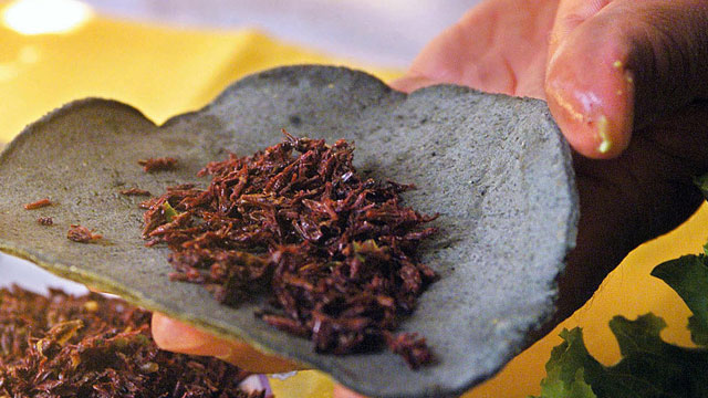 PHOTO:Grasshoppers, (chapulines) are sometimes used in Mexican cuisine, like in this Taco at a Mexico City restaurant. Two students in Monterrey however, are trying to increase consumption of this protein-rich critter, by putting it into cookies.