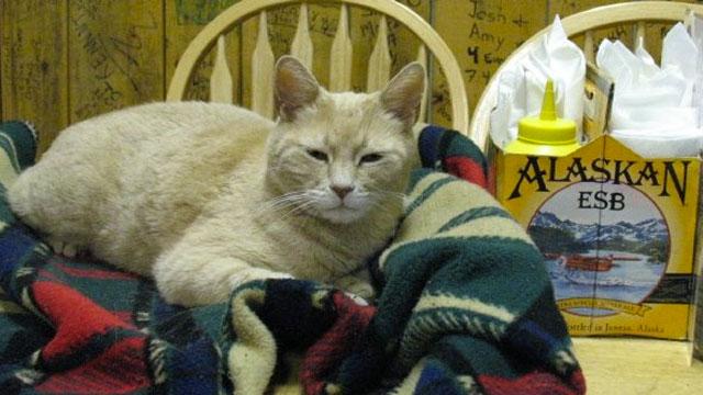 PHOTO:Stubbs, has been mayor of Talkeetna, Alaska, for the past 15 years.
