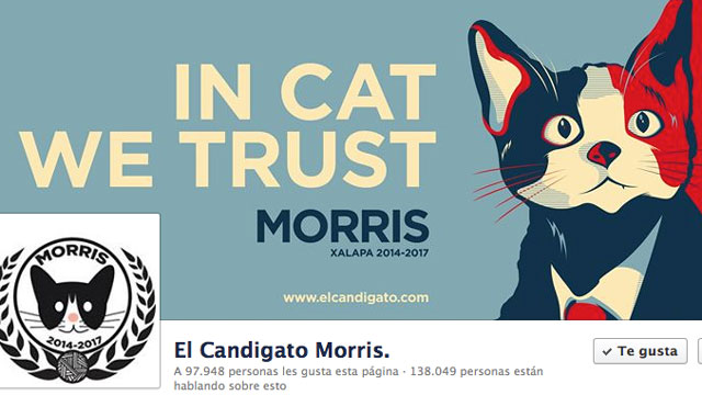 PHOTO:Morris, a cat is runnig for mayor of Xalapa Mexico.
