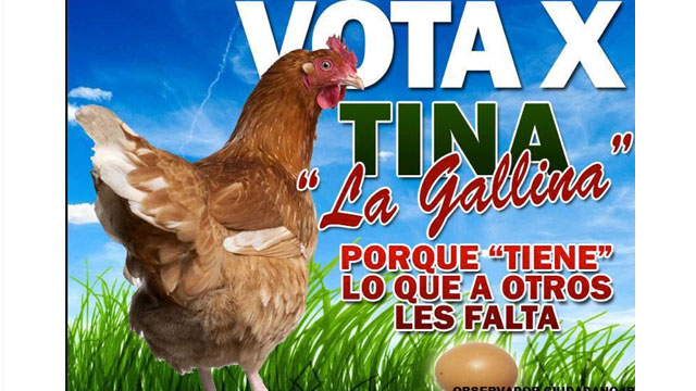 PHOTO:Tina, a Hen, is running for mayor of Tepic, Mexico.