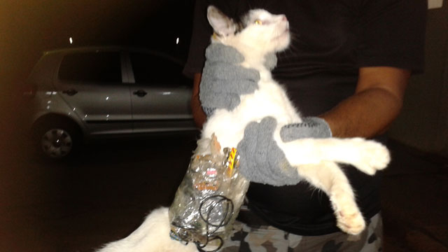 PHOTO:  Superintendency of Prisons of Alagoas (SGAP), guards hold a cat that has items taped to its body at a medium-security prison in Arapiraca, in Alagoas state, Brazil.