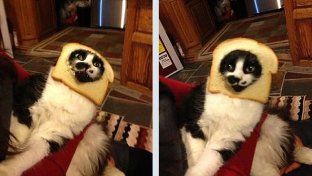 PHOTO: Cats + bread. Mustard optional.