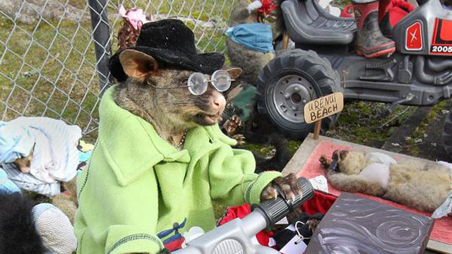 PHOTO:My, what an awesome possum.