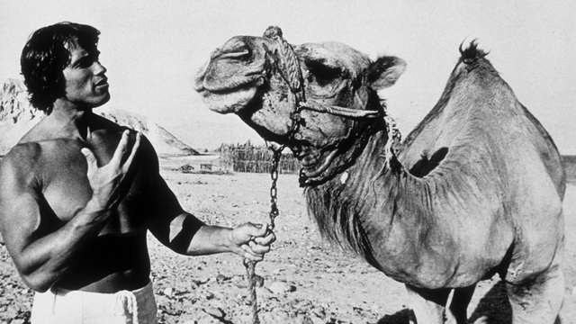 PHOTO:OCTOBER 1977: Bodybuilder Arnold Schwarzenegger poses with a camel in 1977 in Israel.