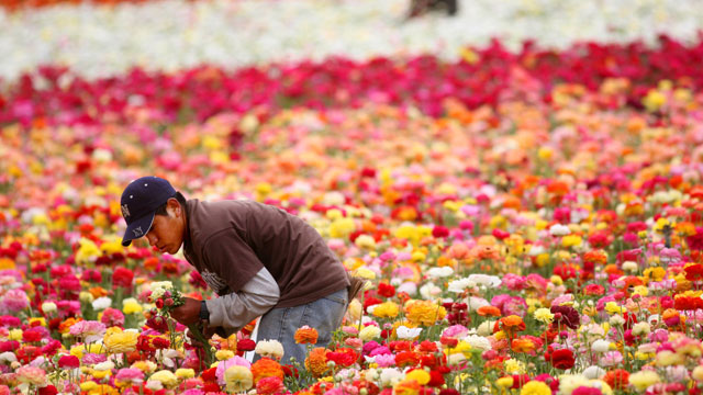 PHOTO:flowers