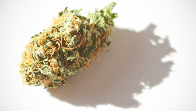 an introduction to the legalization of marijuana Argumentative essay on marijuana legalization today more and more people are deciding to side with pro marijuana legalization for america.