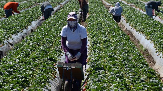 PHOTO:farmers