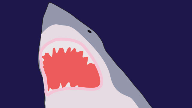 PHOTO:Over 100 million sharks are killed every year.
