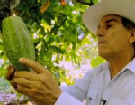 PHOTO:A cacao farmer.