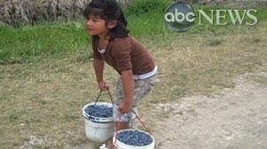 young children working as labor in blueberry fields across the country