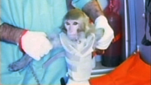 PHOTO: Monkey reportedly launched into space by Iran