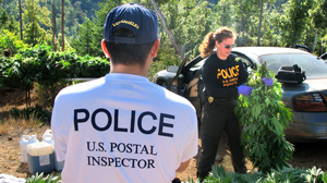 PHOTO the us postal service has increased their seizures of marijuna parcels by 400 percent since 2007