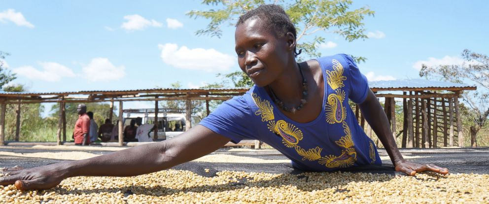 PHOTO: In this Oct. 2015 image, a worker spreads coffee beans. South Sudan has a long history of cultivating coffee. Nespresso and the non-profit organization TechnoServe, have been working to revive high quality coffee production in the country.