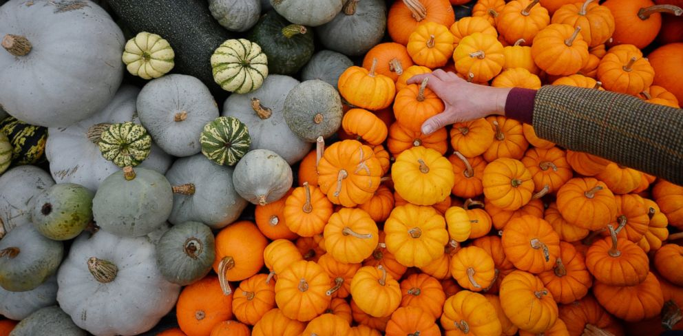 PHOTO: A Kew Gardens employee creates a display with pumpkins during a photocall at Kew Gardens, west of London, Oct. 2, 2013, to promote the venues IncrEdibles Food Festival.