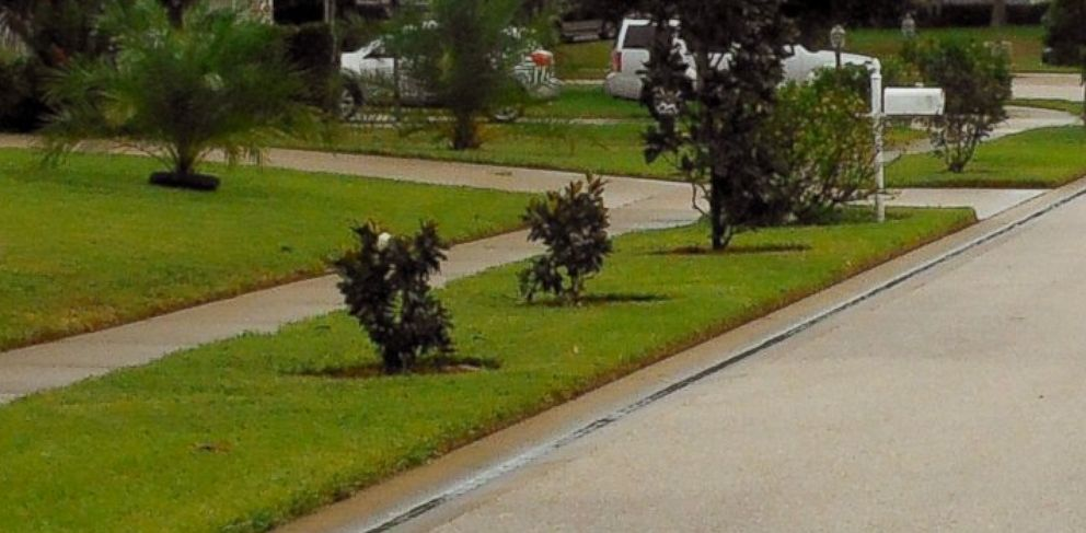 PHOTO: Man fined $5,000 for having trees that are too short.