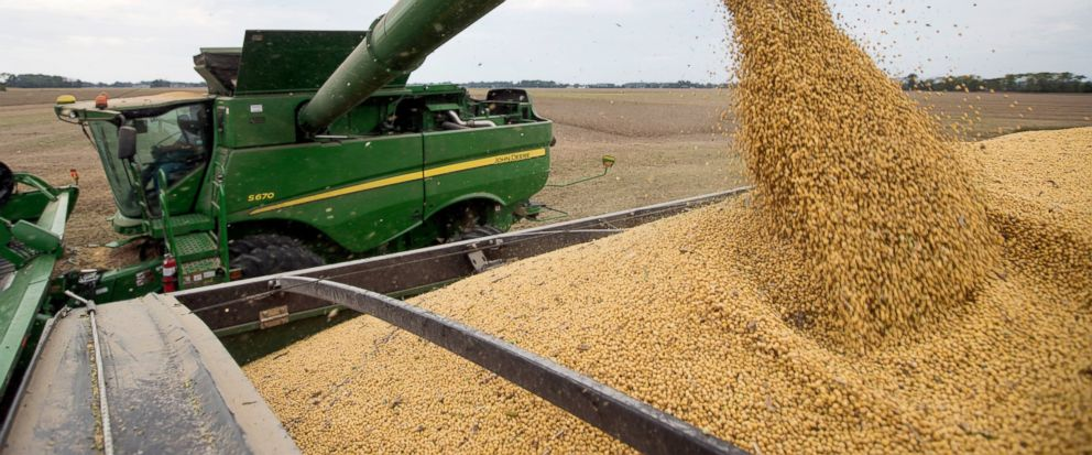 FILE - In this Friday, Sept. 21, 2018, file photo, soybeans are offloaded from a combine during the harvest in Brownsburg, Ind. China's government says American envoys will visit Beijing on Monday for talks over a tariff fight that threatens to hobbl