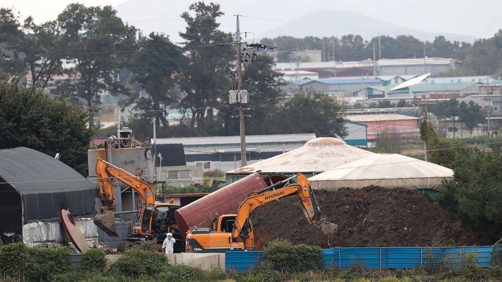 NKorea seen as weak link in swine fever's spread across Asia