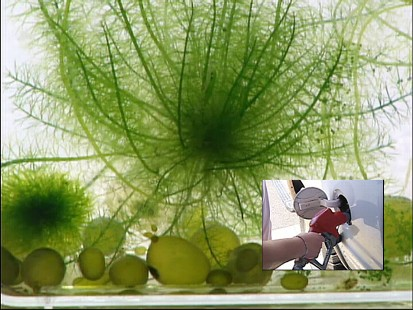 algae into fuel