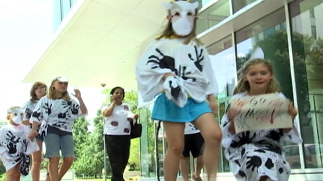 VIDEO: People Dress as Cows to Get Free Chick-Fil-A Food