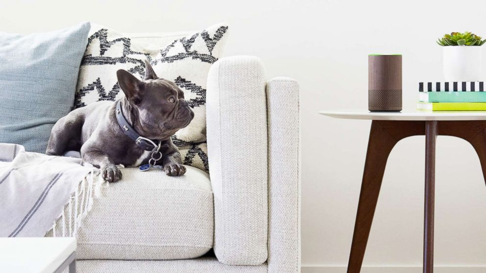 An Amazon Echo sits in a living room in an undated marketing image from Amazon.