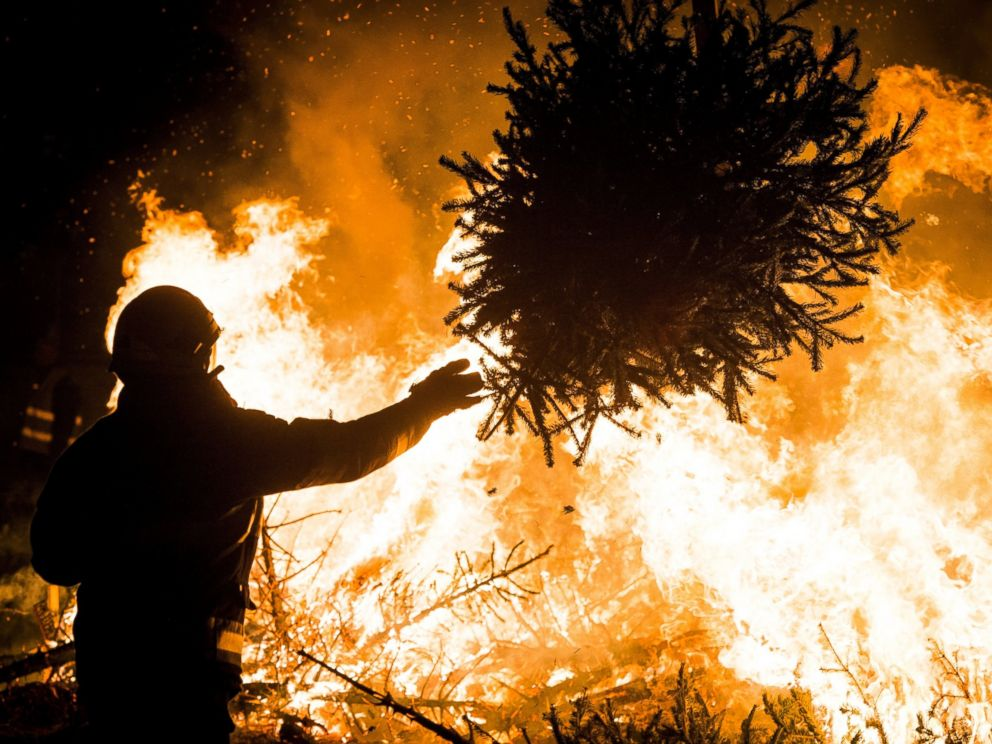 Burning Christmas Tree.Wacky And Wise Ways To Get Rid Of Your Christmas Tree Abc News