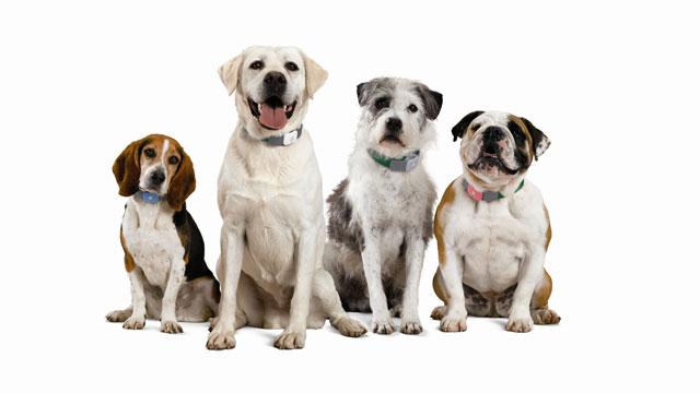 PHOTO: Tagg Pet Tracker