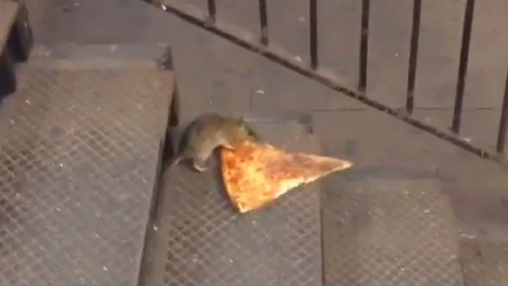 A rat was seen dragging a slice of pizza in New York's subway.
