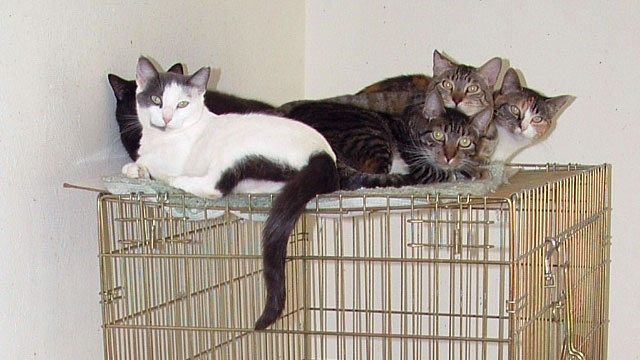 PHOTO:Rescued feral cats