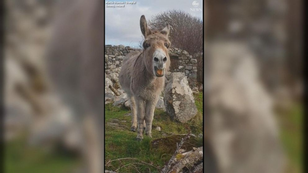 VIDEO: Singing donkey hits the high notes as she tunefully serenades passerby