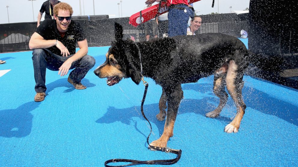 Prince Harry helps a service dog out from the pool as they take part in a race in the pool with their Invictus competitor handlers on the final day of the Invictus Games Orlando 2016 at ESPN Wide World of Sports, May 12, 2016, in Orlando, Fla.