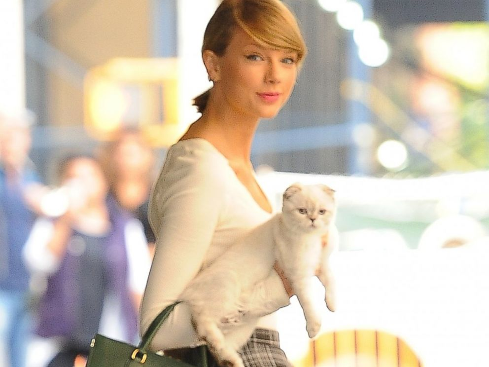 Taylor Swift Explains Why She Always Carries Her Cat Abc News