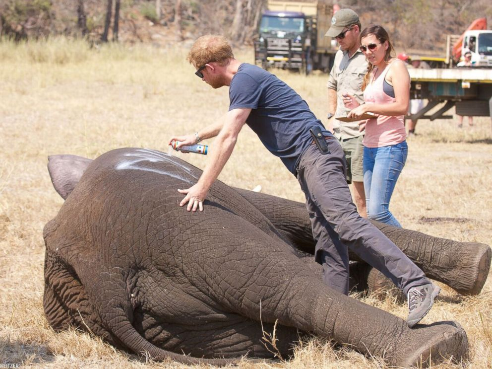 PHOTO: Prince Harry, 32, spent nearly three weeks in Malawi with African Parks, a conservation NGO, helping to implement the first phase of 500 Elephants.