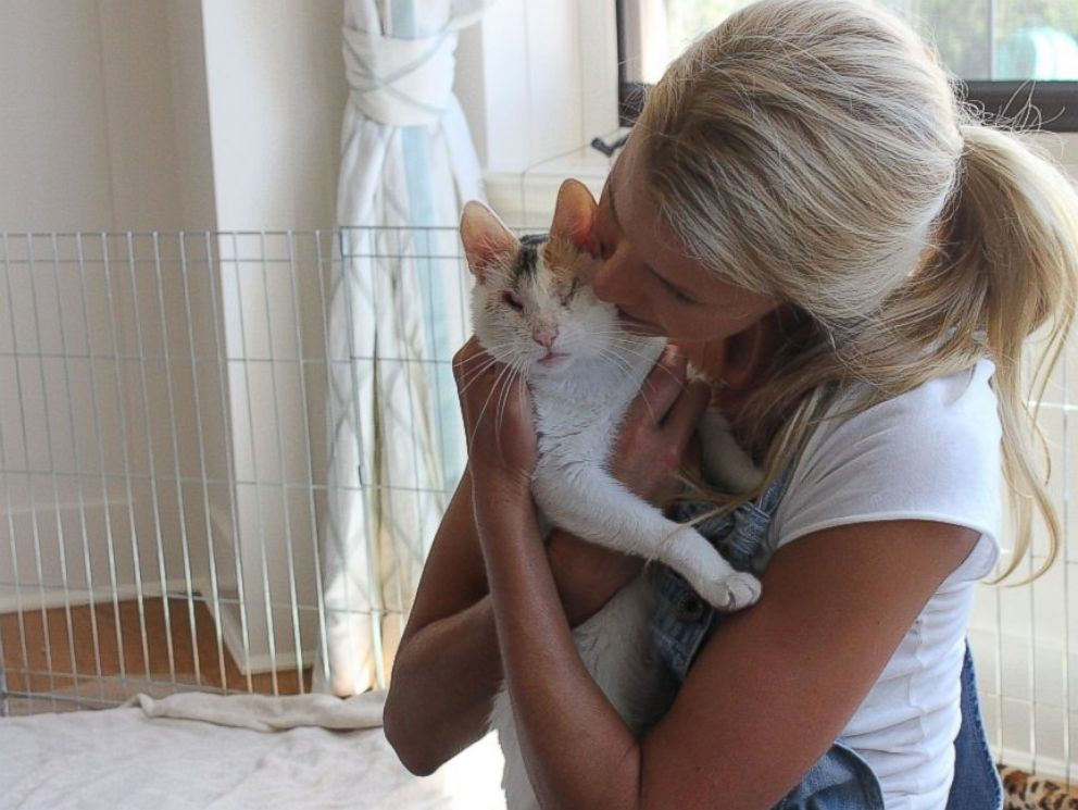 PHOTO: Bella, a blind foster cat cared for by Beth Stern.