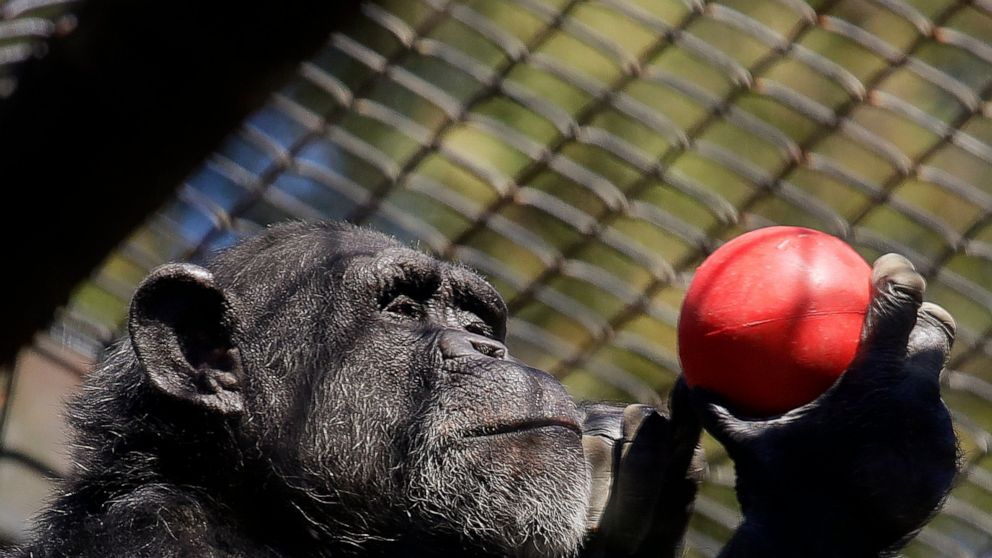 Financially struggling zoos could be latest pandemic victims thumbnail