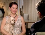 """PHOTO: Ashley Judd, who has reemerged in a new role a new television series on ABC called """"Missing,"""" opened up about dealing with her depression, with her registered """"psychological support"""" dog named Shug at her side."""