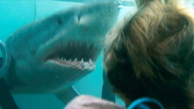 Great White Shark Gets Cozy With Surfers Video Abc News