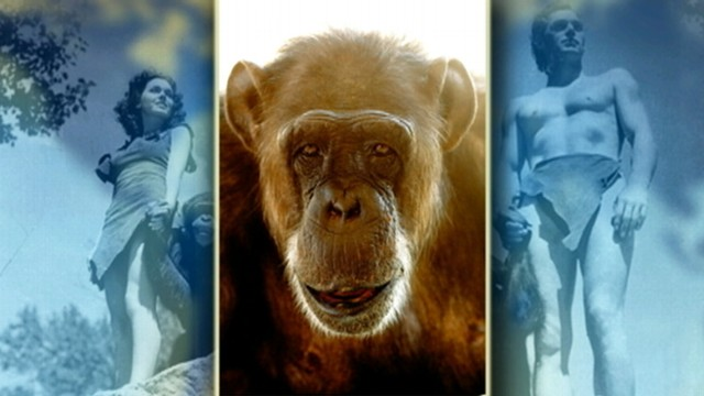 VIDEO: The famous chimpanzee died at a Florida animal sanctuary.