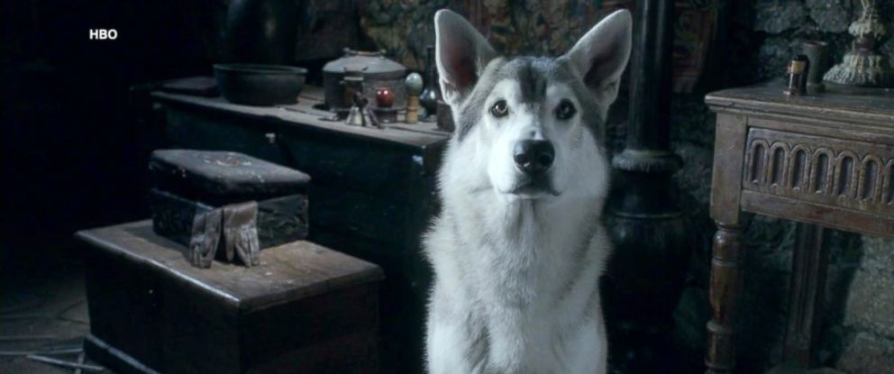 "PHOTO: An image of a direwolf in a scene from the series ""Game of Thrones."""