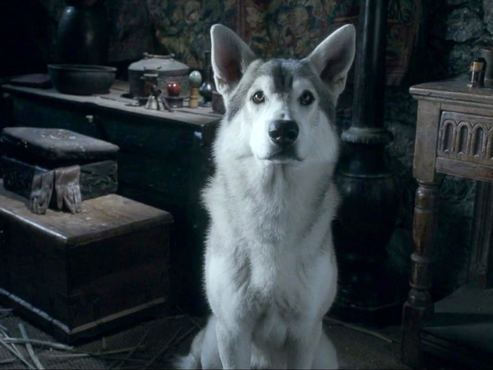PHOTO: An image of a direwolf in a scene from the series Game of Thrones.