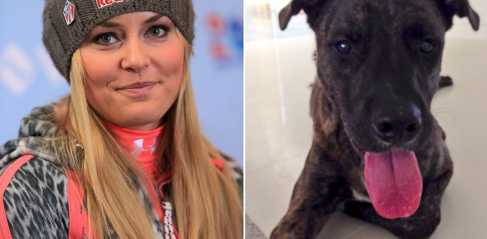 PHOTO: Lindsay Vonn, pictured left in this Nov. 8, 2013 file photo taken in Vail, Colo., has adopted a new dog, Leo, pictured right in this Jan. 8 2014 photo posted to Twitter.