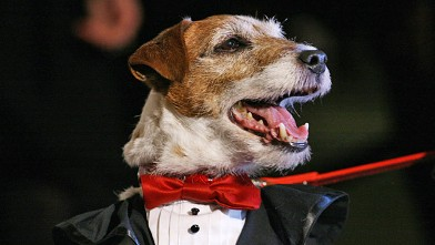 PHOTO: Uggie